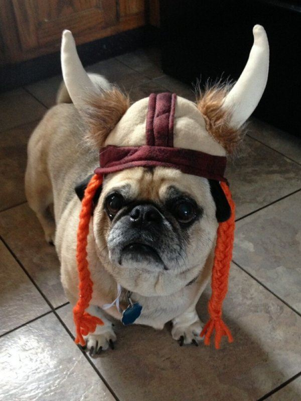 Dog Ready for Battle
