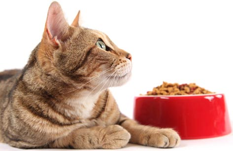 What-to-do-when-cat-stops-eating