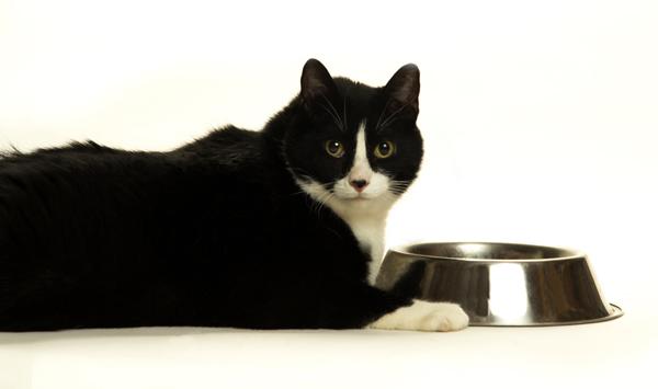 Cat stops eating