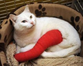 what-to-do-for-broken-bones-in-cats