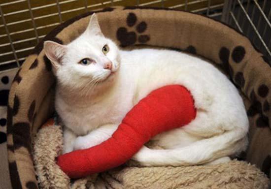 what-to-do-for-broken-bones-in-cats