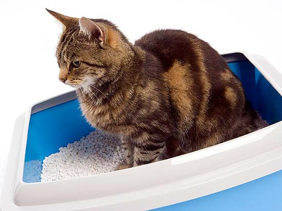 litter box odor control