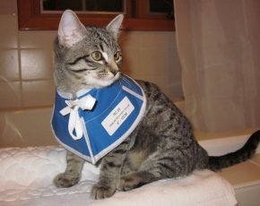 Wound Treatment for Cats