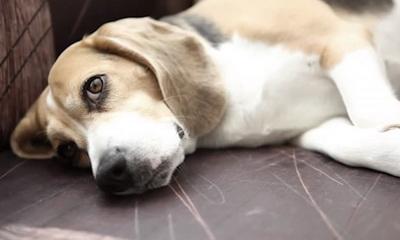 dog poisoning symptoms