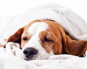 dog heat stroke