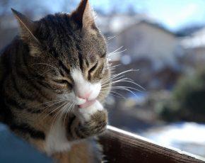 cat excessive scratching