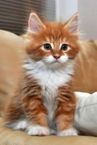 How Old Your Kitten is