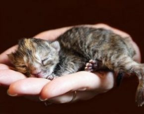 How to Take Care of Orphaned Kittens