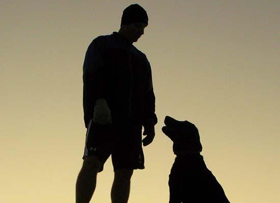 dog as pet
