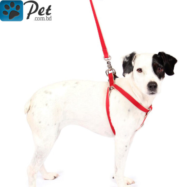 Dog-Leash-with-Harness