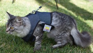 how to harness leash train a cat2