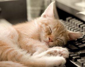 stop-awaking-cat-whole-night
