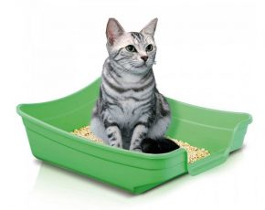 why cat stop using litter box