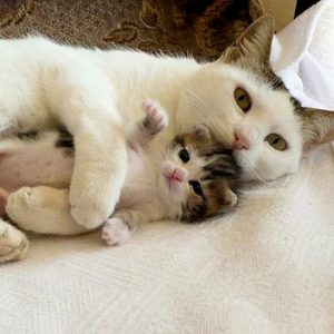 care-of-mom-cat-2