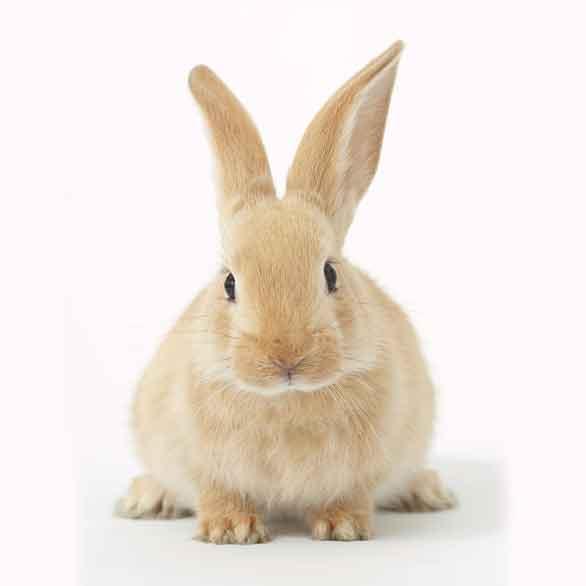 Rabbit Food & Snack